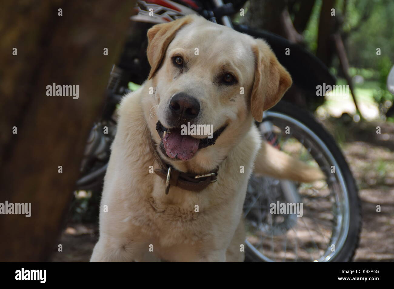 Perro feliz - cane felice attesa per il suo proprietario Immagini Stock