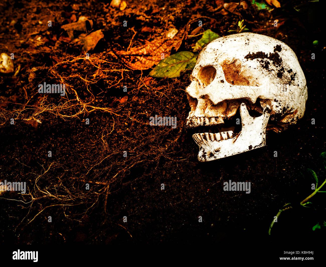 A fianco del teschio umano sepolto nel terreno.Il cranio ha lo sporco attaccato al cranio.concetto di morte e di Immagini Stock