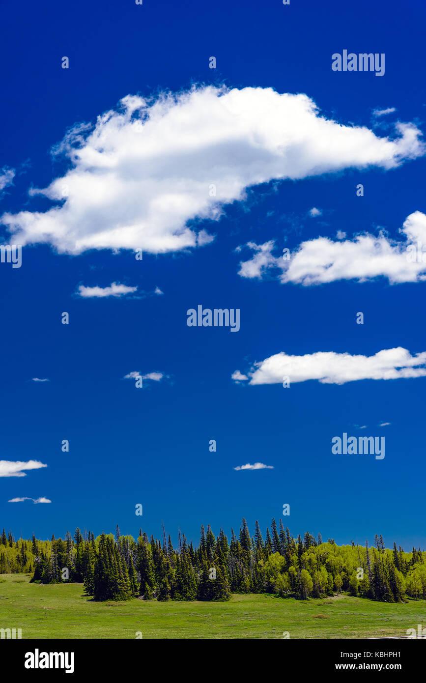 Aria fresca, un cielo azzurro con soffici nuvole verdi alberi e prati erbosi. Foto Stock