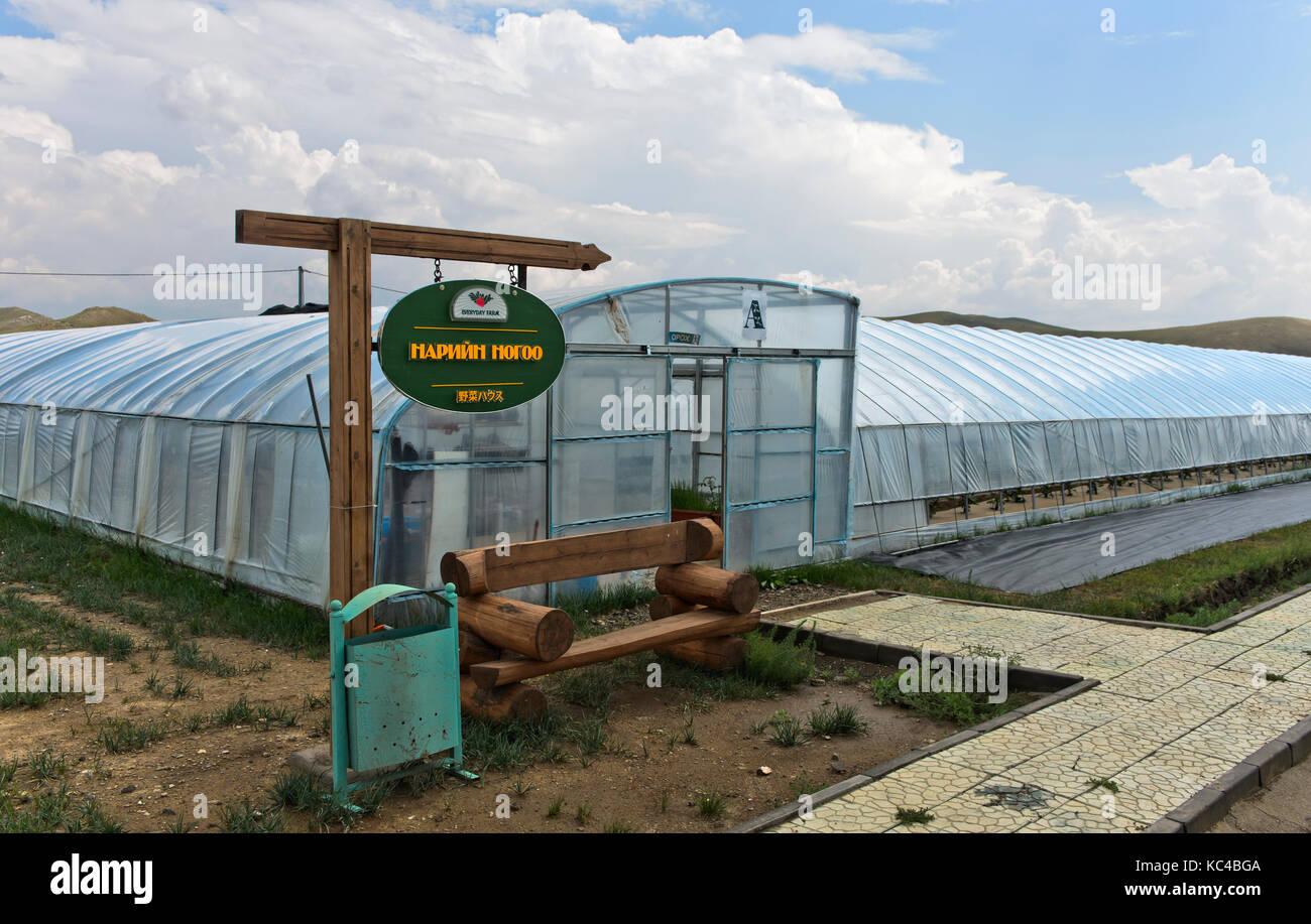 Polytunnels per la produzione di fragole in suolo privo di substrati, mongolo-giapponese ventrue comune fattoria Immagini Stock