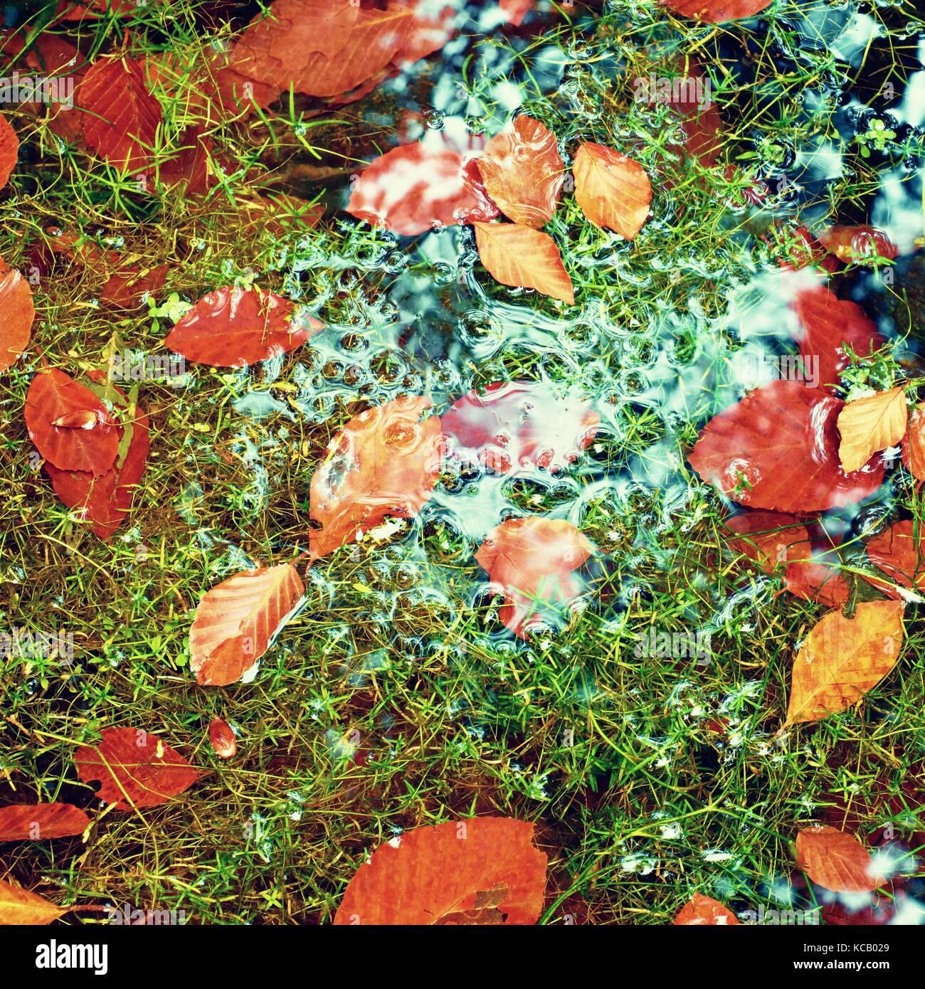 Le alghe con catturato caduta foglie sulla ghiaia di basalto specchiato in acqua di ruscello di montagna. brillanti Immagini Stock