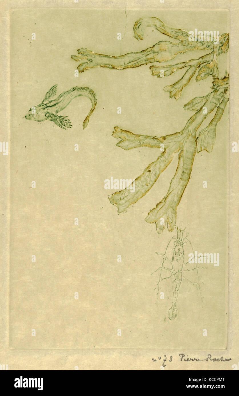 Disegni E Stampe Stampa Le Alghe Di Mare Algues Marines L