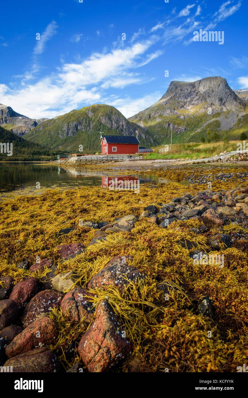 Le pietre e le alghe su una spiaggia sulle isole Lofoten in Norvegia Foto Stock