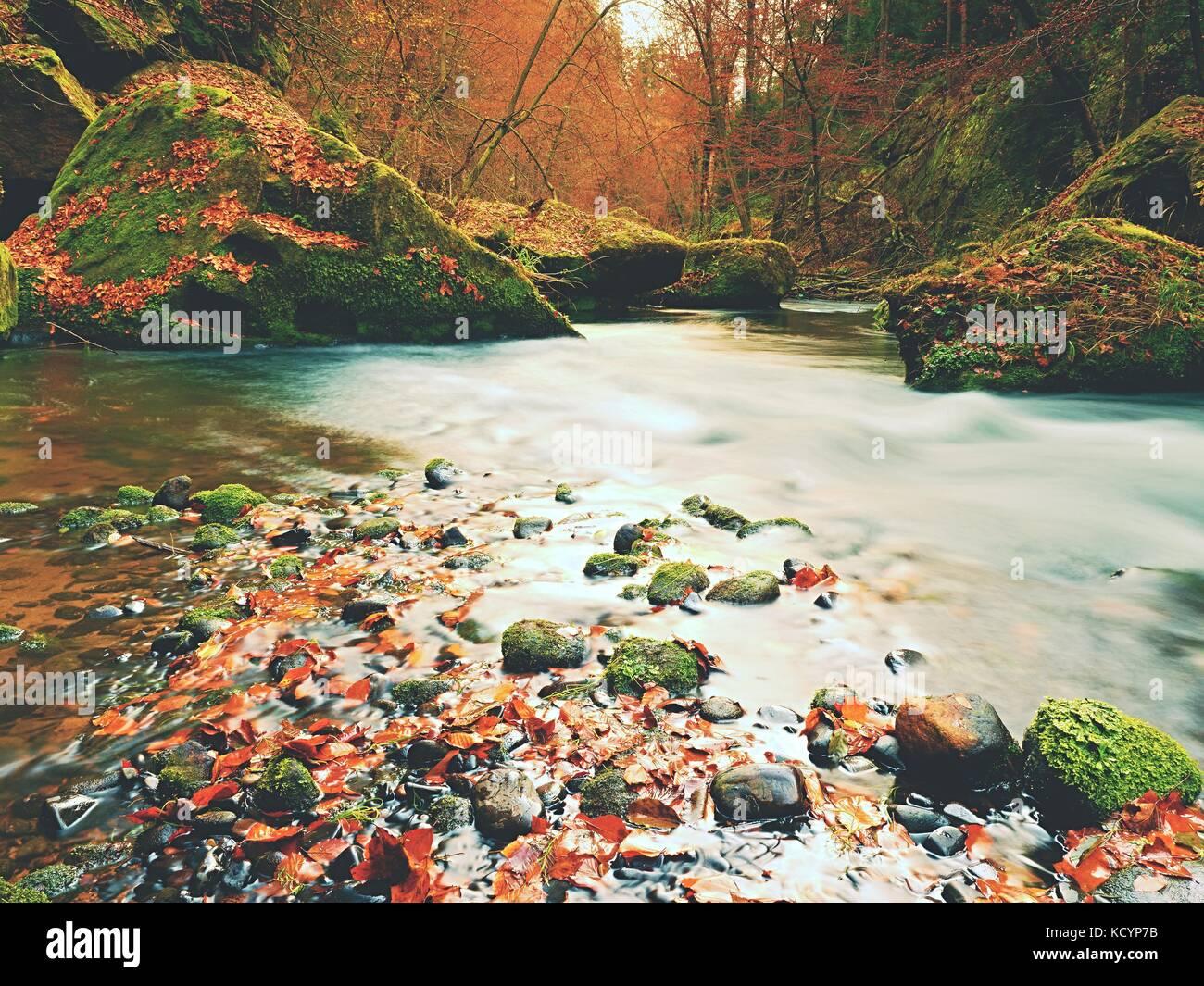 Stony banca d'autunno del fiume di montagna coperti da orange faggio. foglie fresche foglie colorate sui rami sopra acqua rendono la riflessione Foto Stock
