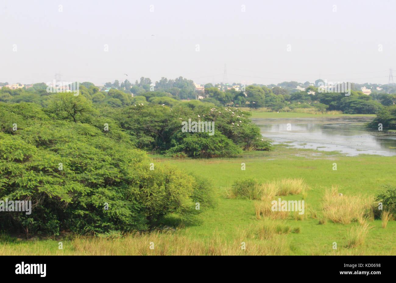 Vista aerea di sultanpur parco nazionale da un bird watching torre situata all interno del parco Immagini Stock