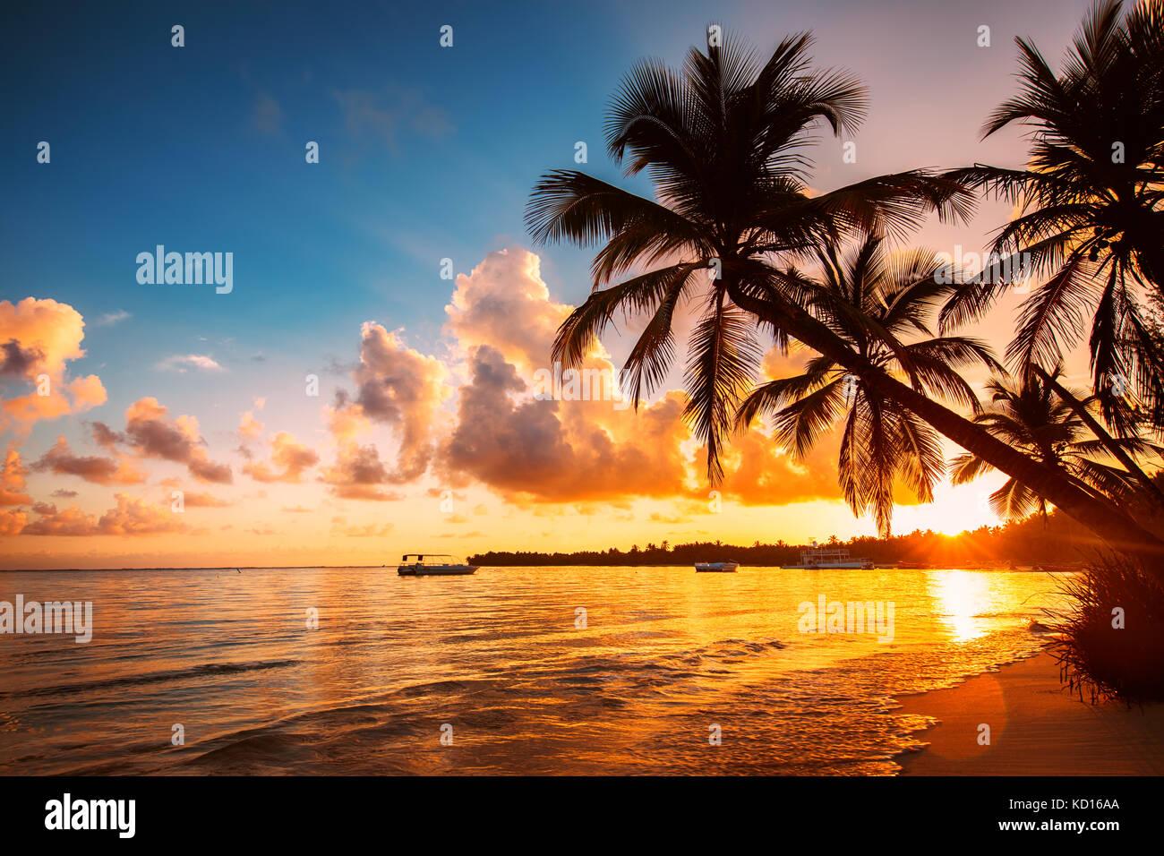 Palmtree sagome sulla spiaggia tropicale, Repubblica dominicana Immagini Stock