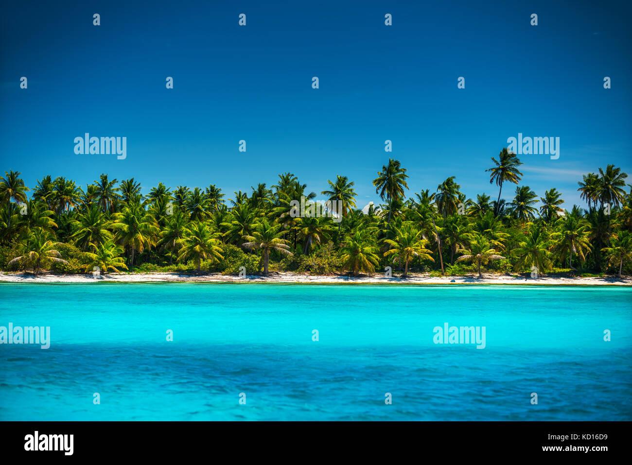 Palme sulla spiaggia tropicale, Repubblica dominicana Immagini Stock