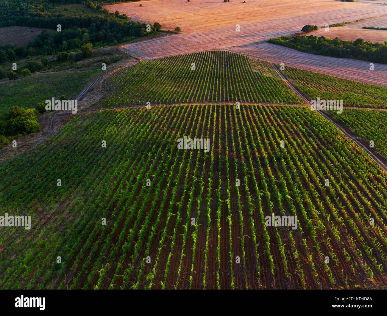 Veduta aerea vigneto in Europa. Foto Stock