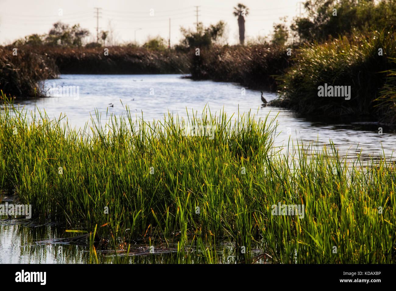Zone umide ballona riserva ecologica, playa vista, Los Angeles, california, Stati Uniti d'America Foto Stock
