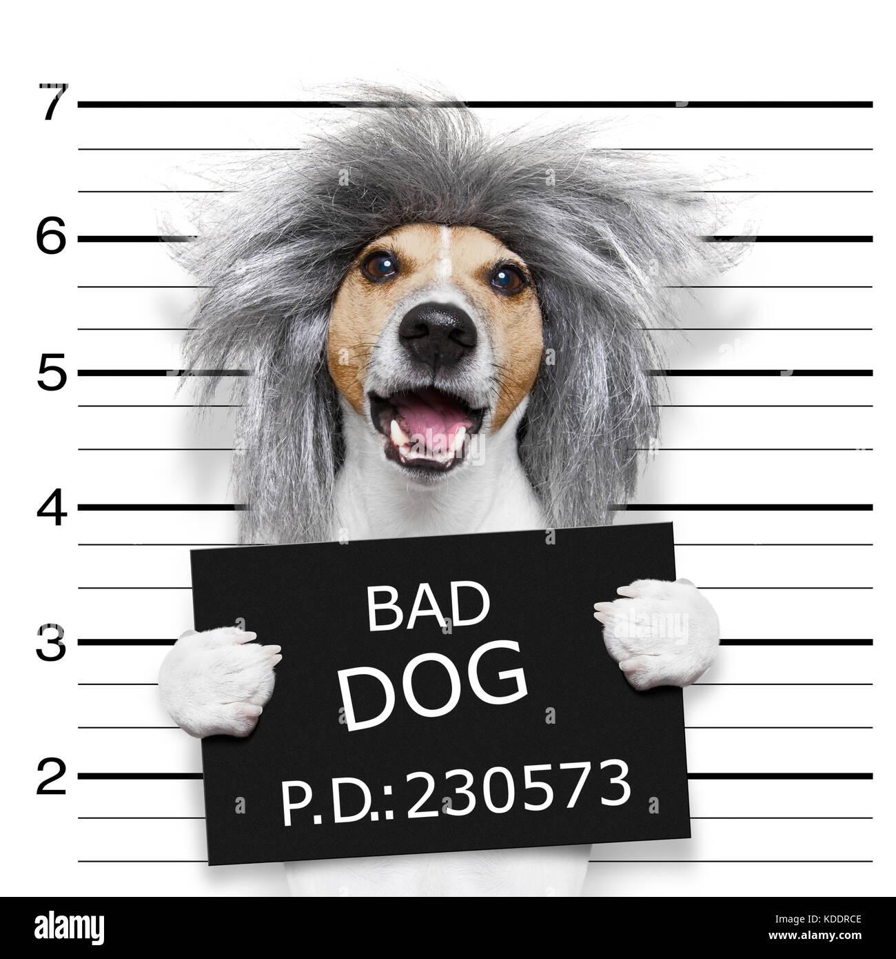Nerd crazy jack russell cane presso la stazione di polizia per un mugshot c24196e03f14
