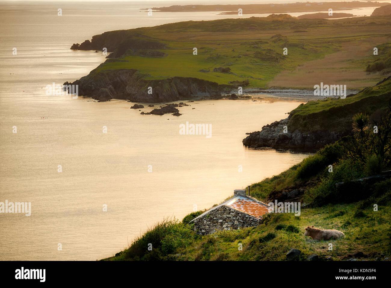 Vacca, capanna di pietra e la fascia costiera da sky road con dolphine beach. vicino a Clifden. connemara,County Immagini Stock