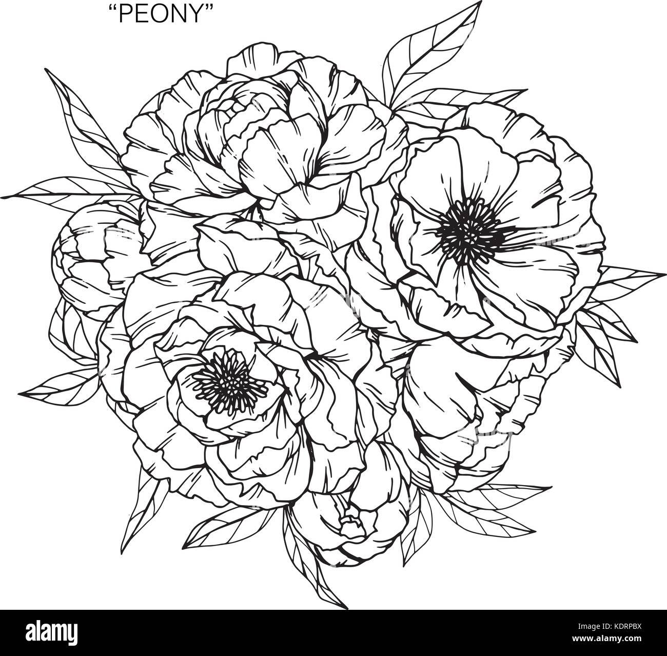 Disegno Mazzo Di Fiori.Bouquet Di Fiori Di Peonia Disegno Illustrazione Vettoriale