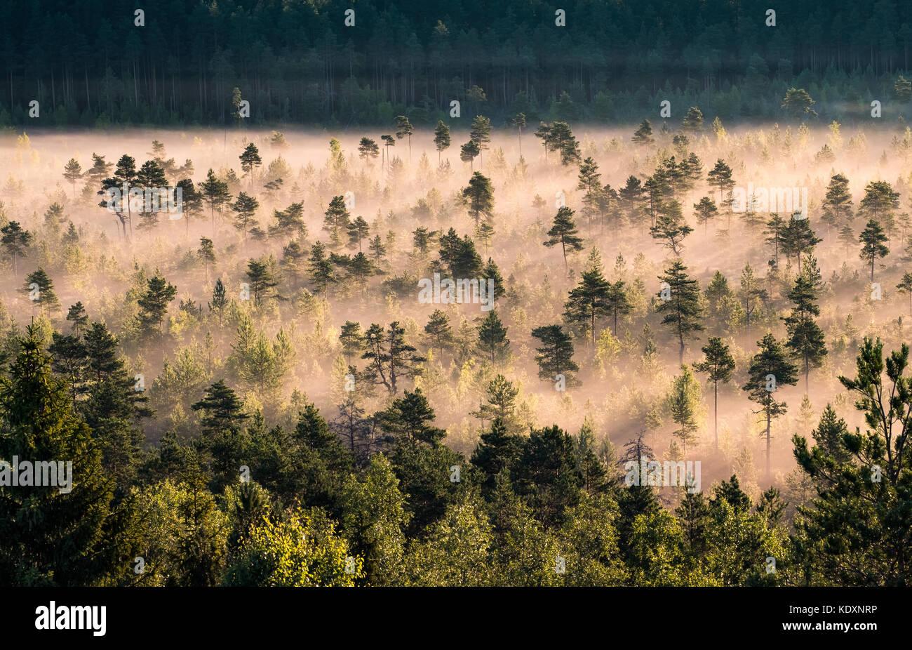 Nebbia di mattina e sunrise nel torronsuo national park, Finlandia Immagini Stock