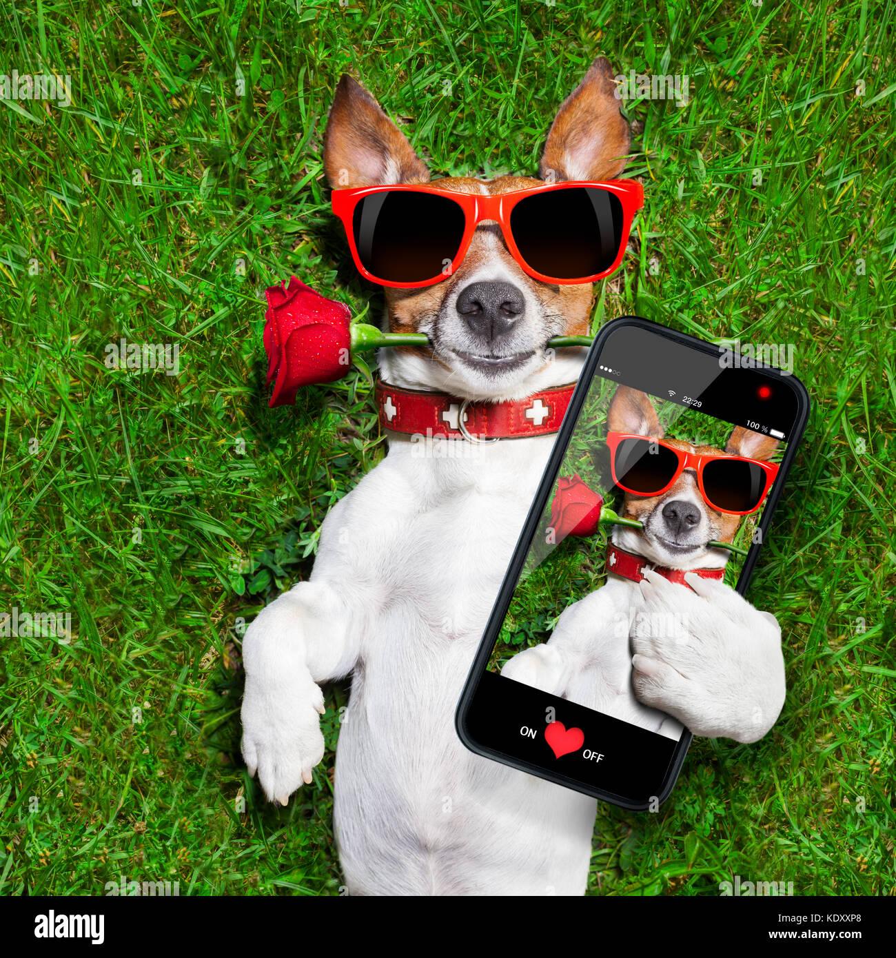 Service comm -Utenti Cane-con-una-rosa-rossa-nella-sua-bocca-prendendo-un-selfie-kdxxp8