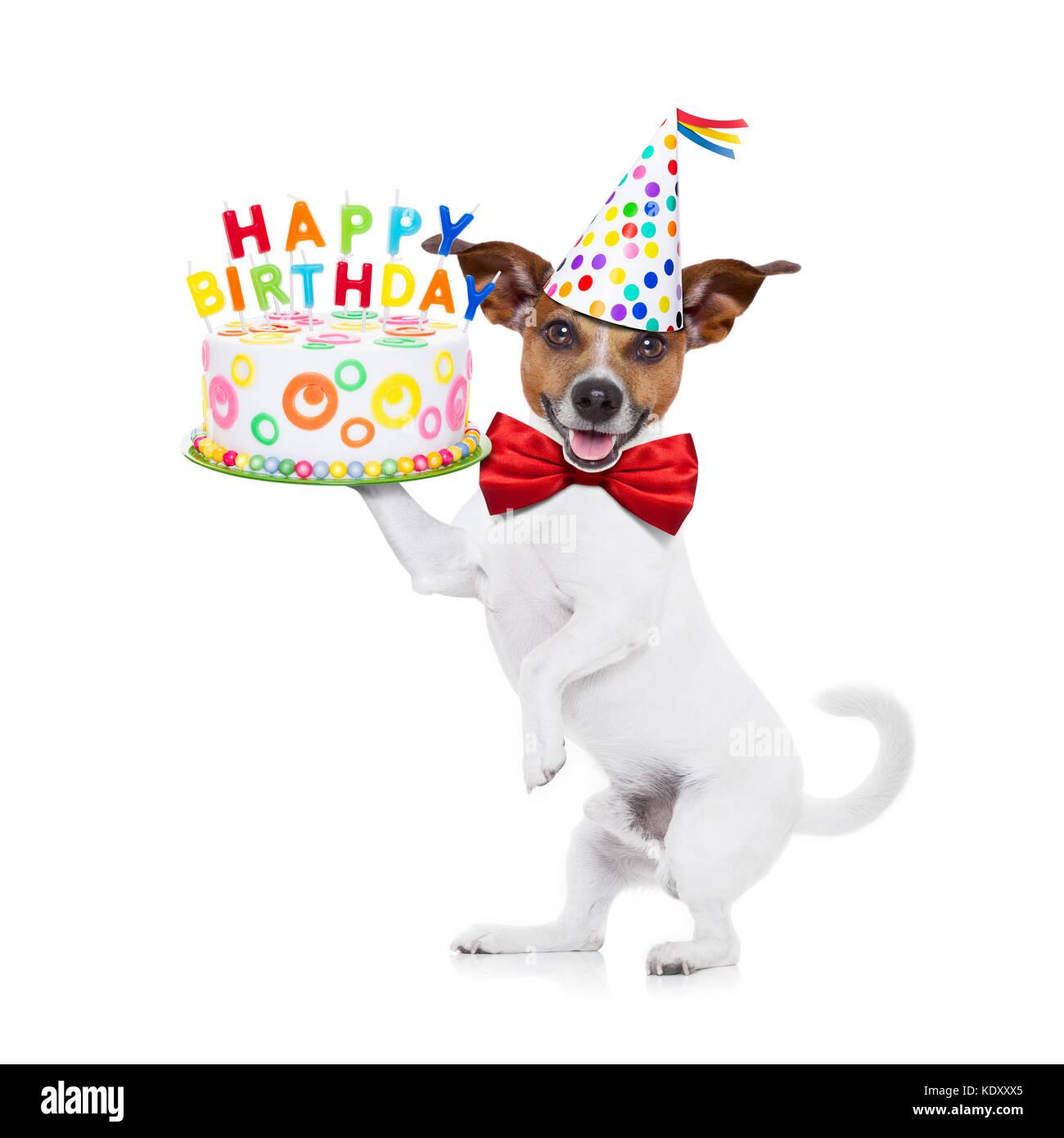 Jack Russell Cane Tenendo Un Buon Compleanno Torta Con Candele