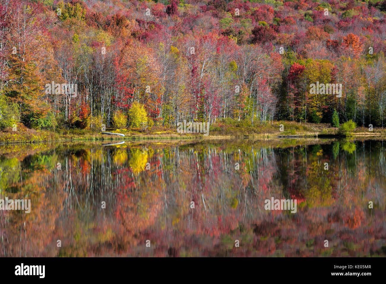 Colorato fogliame di autunno si riflette sulla superficie liscia di un lago di montagna nella valle di Canaan, West Virginia, USA Foto Stock