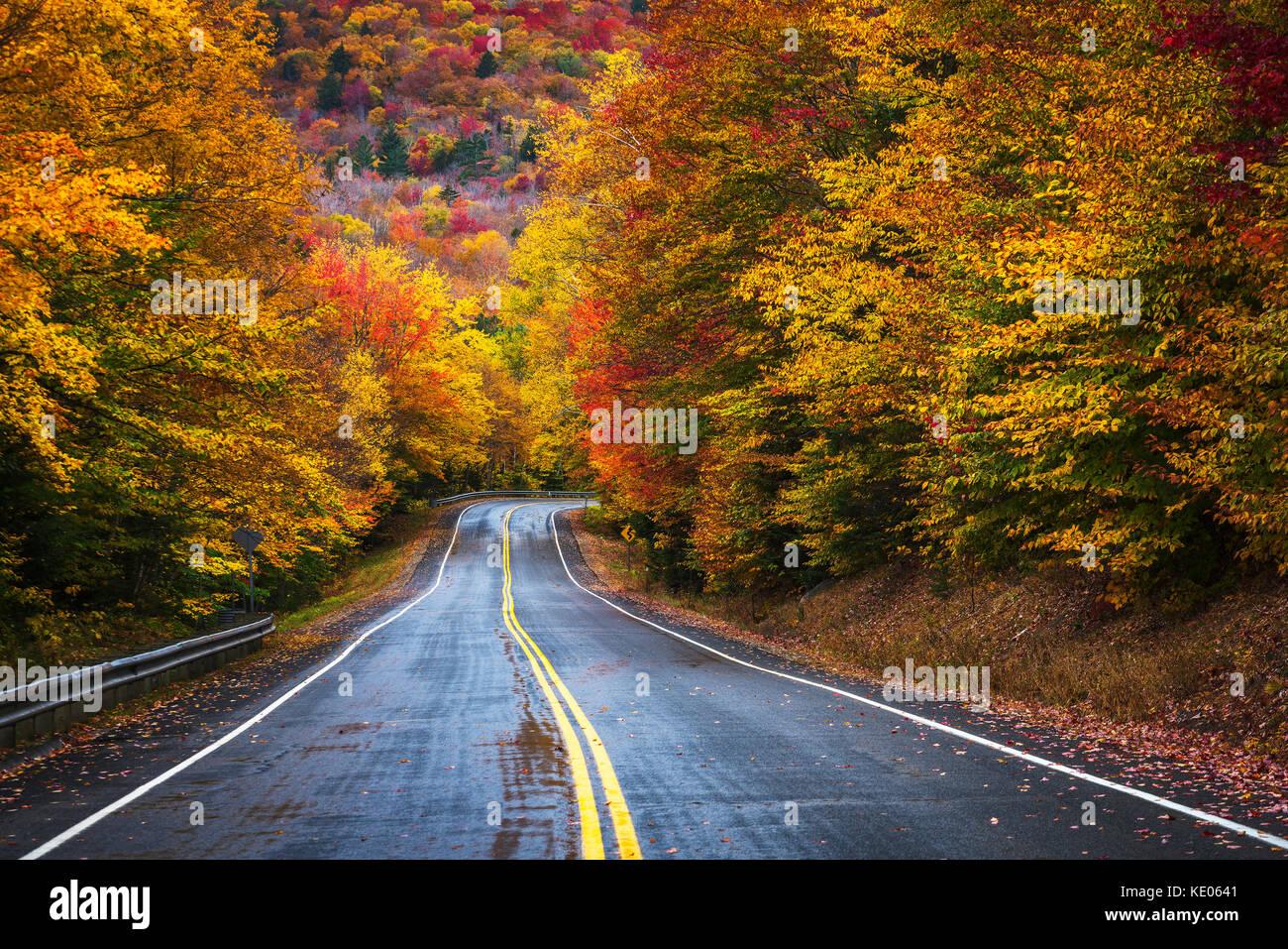 Una strada a due corsie, inghiottito dai colori d'autunno fogliame, curve e scompare nella foresta di White Mountains del New Hampshire del New England, Stati Uniti d'America. Foto Stock