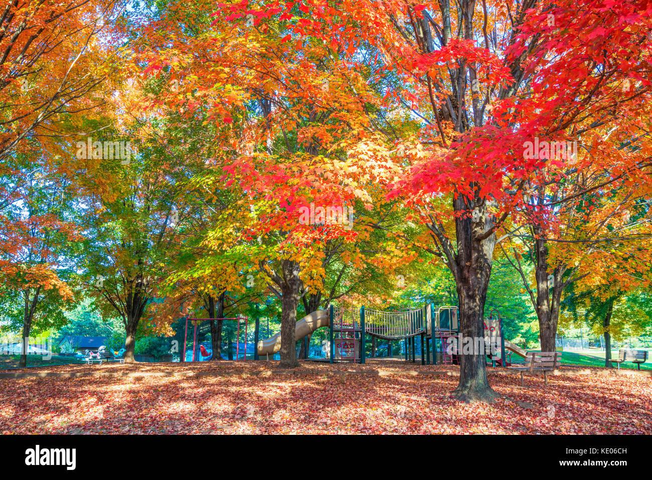 Alberi con colorati fogliame di autunno dare ombra in un quartiere parco giochi. Foto Stock