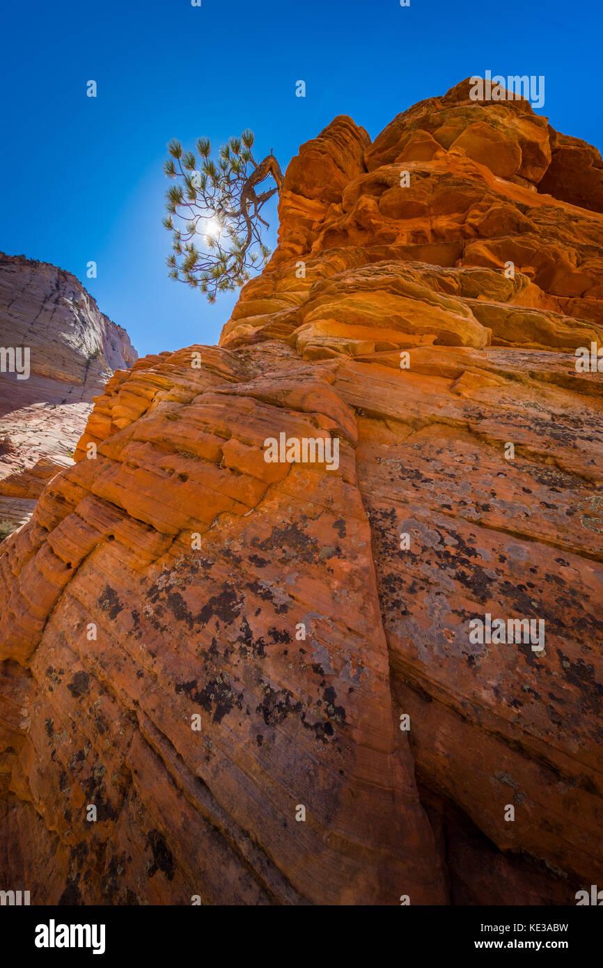 Zion National Park è un parco nazionale degli Stati Uniti situato nella parte sud-ovest dello Utah. Una caratteristica Immagini Stock
