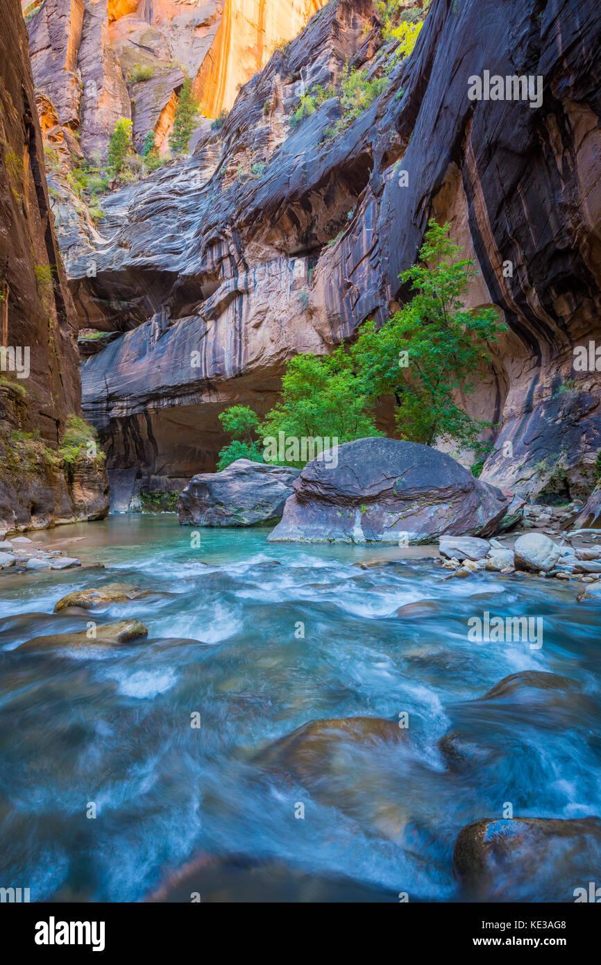 La si restringe nel Parco Nazionale di Zion, (vicino a Springdale, Utah) è una sezione del canyon sulla forcella Immagini Stock