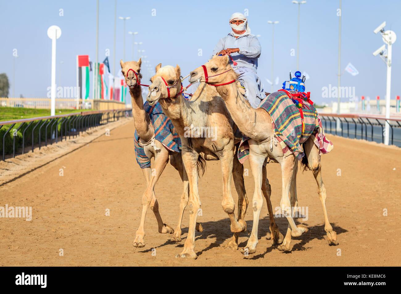 Dubai, Emirati Arabi Uniti - 25 marzo 2016: la pratica per corse di cammelli a dubai camel racing club, al marmoom, Immagini Stock