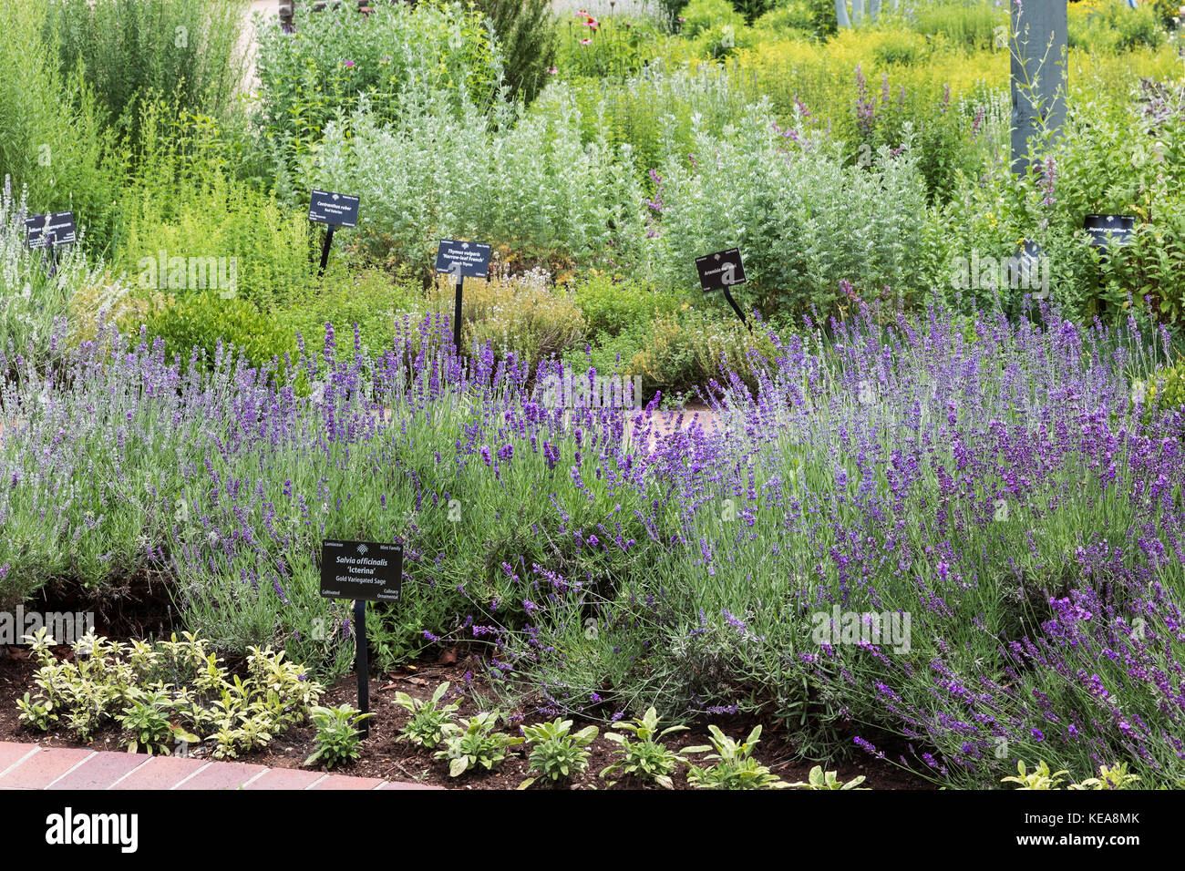 Giardino Di Erbe Aromatiche Denver Botanic Gardens Denver