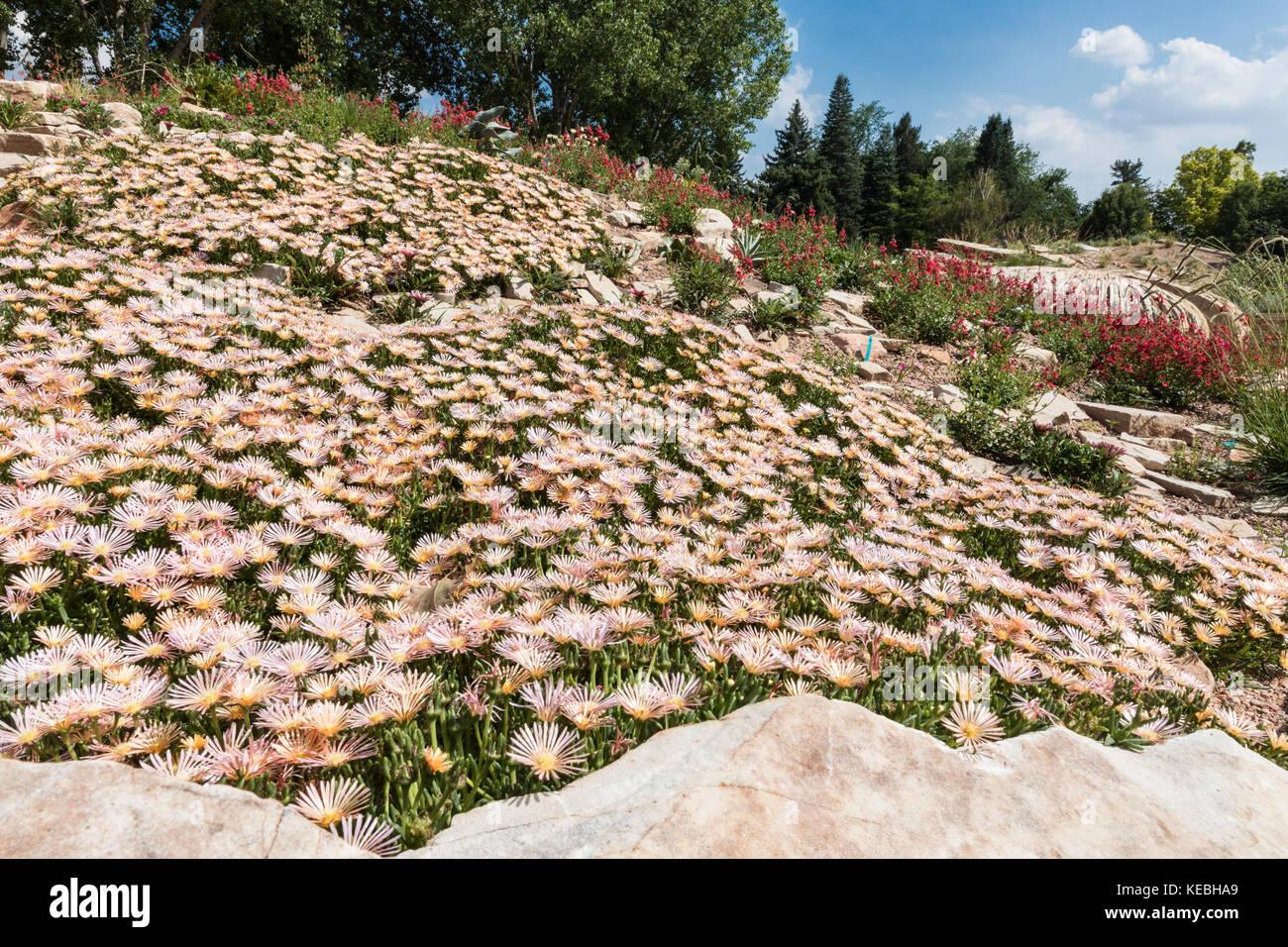 Succulento giardino, denver Botanic Gardens, Denver, Colorado, Stati Uniti d'America Immagini Stock