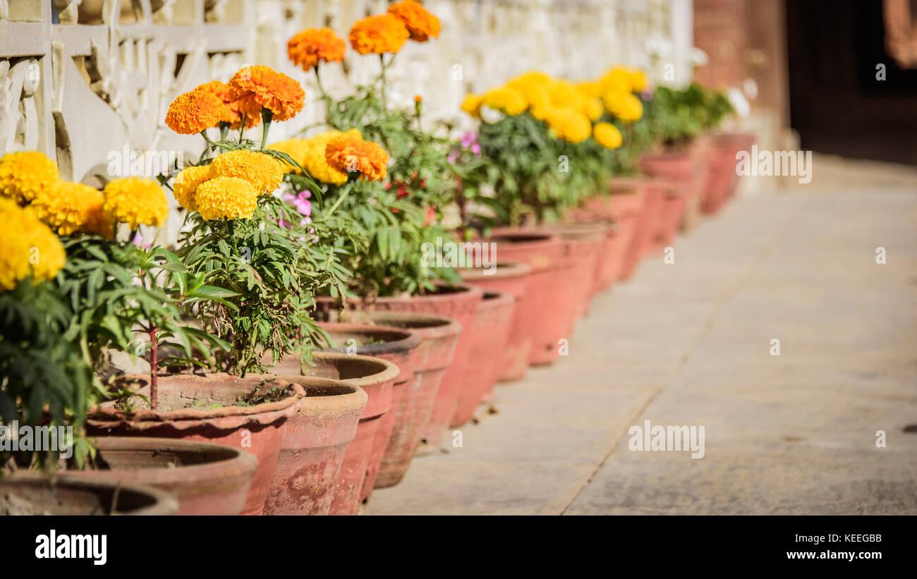 Fiori Gialli In Vaso.Fila Di Fiore Giallo Vasi Per Piante In Durbar Square Nepal Foto