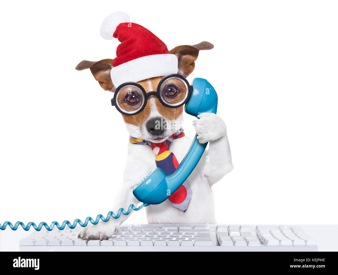 Crazy jack russell cane con occhiali nerd come un ufficio business  lavoratore sul telefono o telefono ab0070081758
