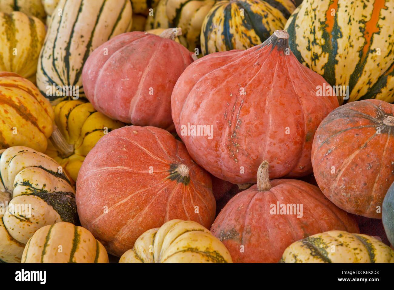 Fresche raccolte Winter squash , Pepita d'Oro Delicata, gnocco Dolce & Carnevale. Immagini Stock