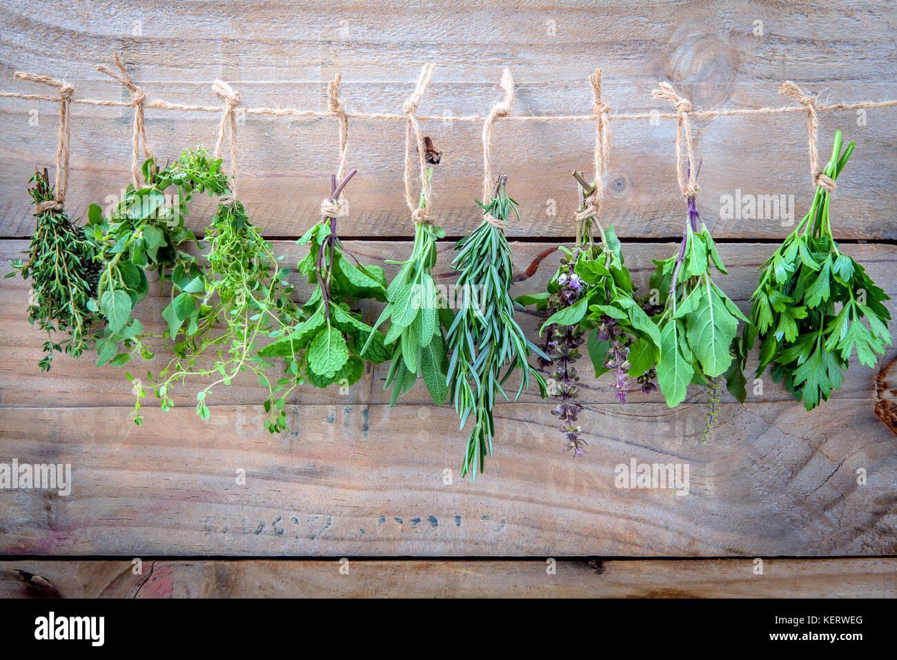 Un assortimento di appendere le erbe , Prezzemolo , origano, menta,salvia rosmarino, basilico dolce,basilico santo Immagini Stock