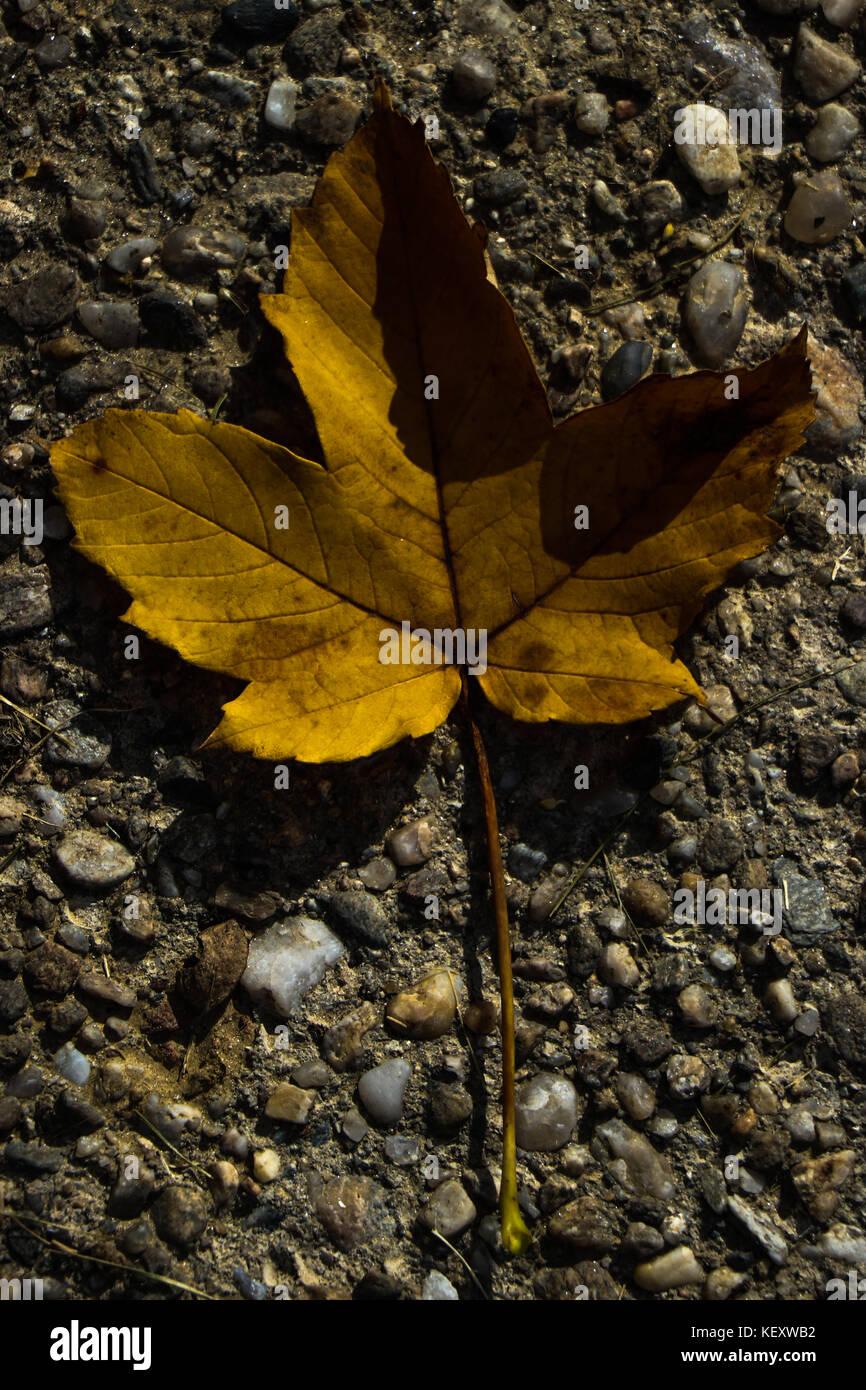 Un giallo autumn leaf su calcestruzzo Immagini Stock