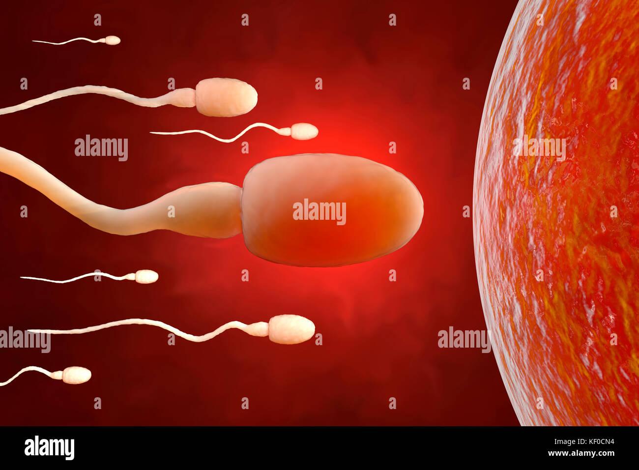 Lo sperma cercando di raggiungere una cellula uovo, rendering 3D Immagini Stock