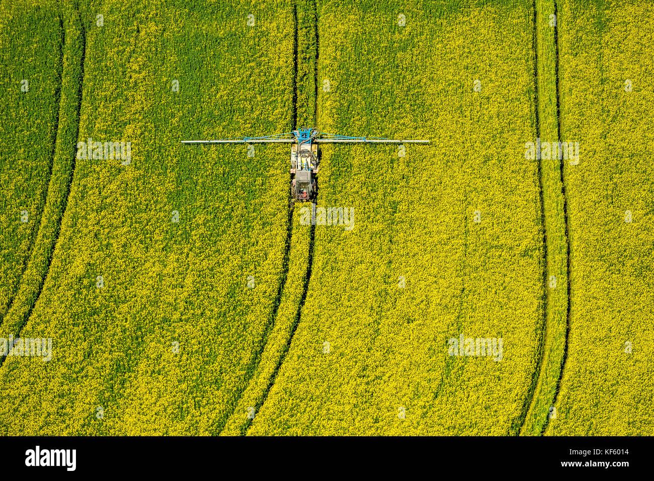 Träcker pesticidi spruzzato su un verde campo di mais, agricoltura, warstein, sauerland, RENANIA DEL NORD-VESTFALIA, Immagini Stock
