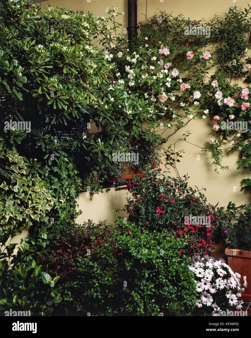 Terrazze e balconi fioriti, gardenia grandiflora, fucsia ...
