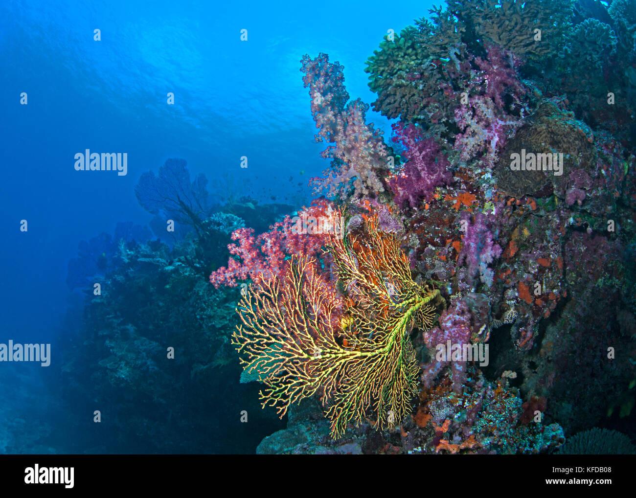 Isole Figi barriere coralline. vicino alla Laguna di Beqa, Viti Levu. Luglio 2017. Immagini Stock