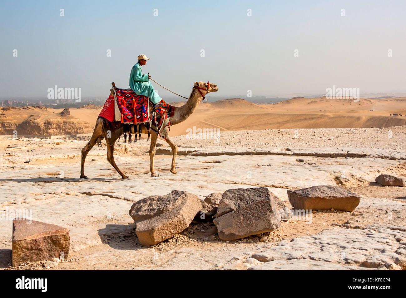 Giza Egitto- febbraio 2010: beduino sul cammello Immagini Stock