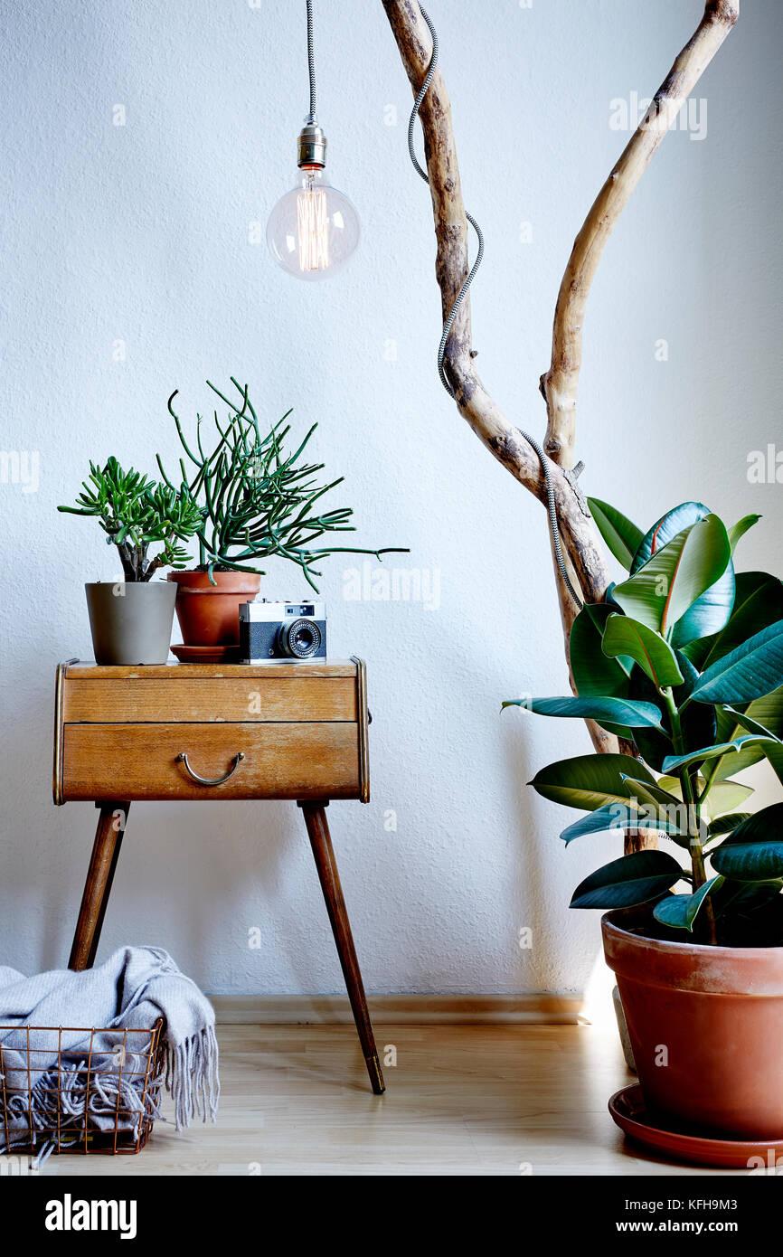 Living room design vintage e moderna miscela con abbondanza di piante nella soleggiata atmosfera Immagini Stock