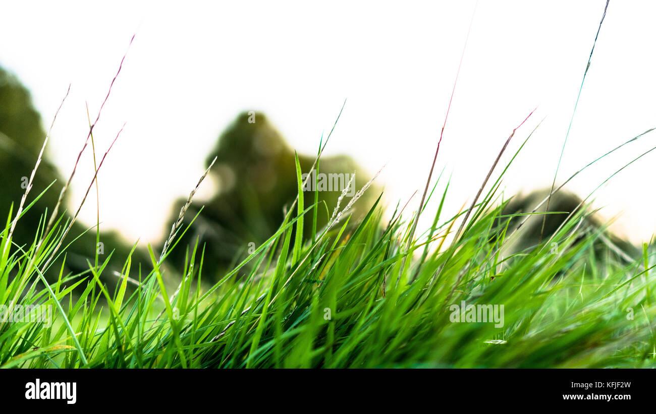 Chiudere l'erba su Broomfield Park serata estiva a piedi a nord di Londra Immagini Stock