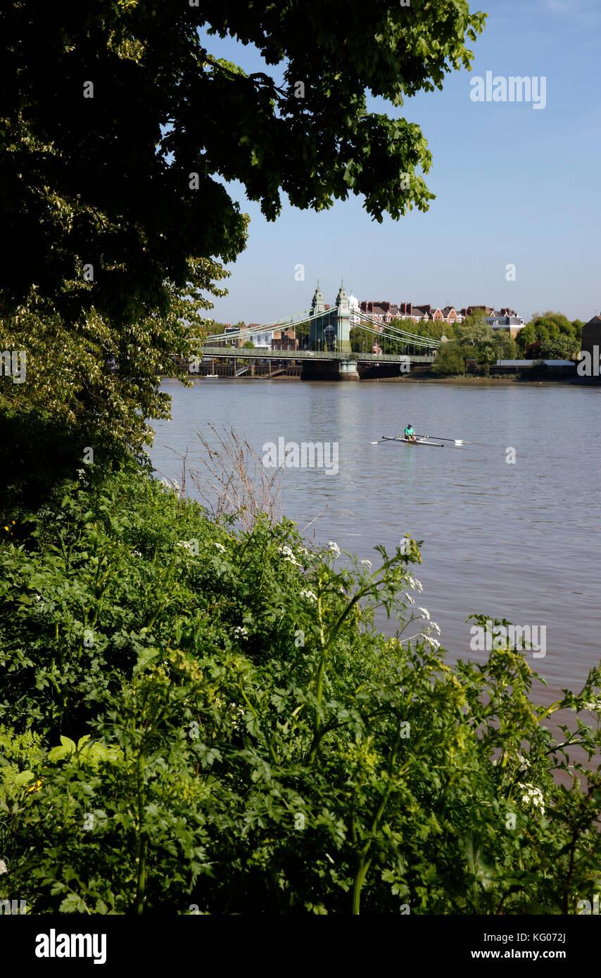 Vogatore sul Fiume Tamigi a Hammersmith Bridge, Hammersmith, London, Regno Unito Immagini Stock