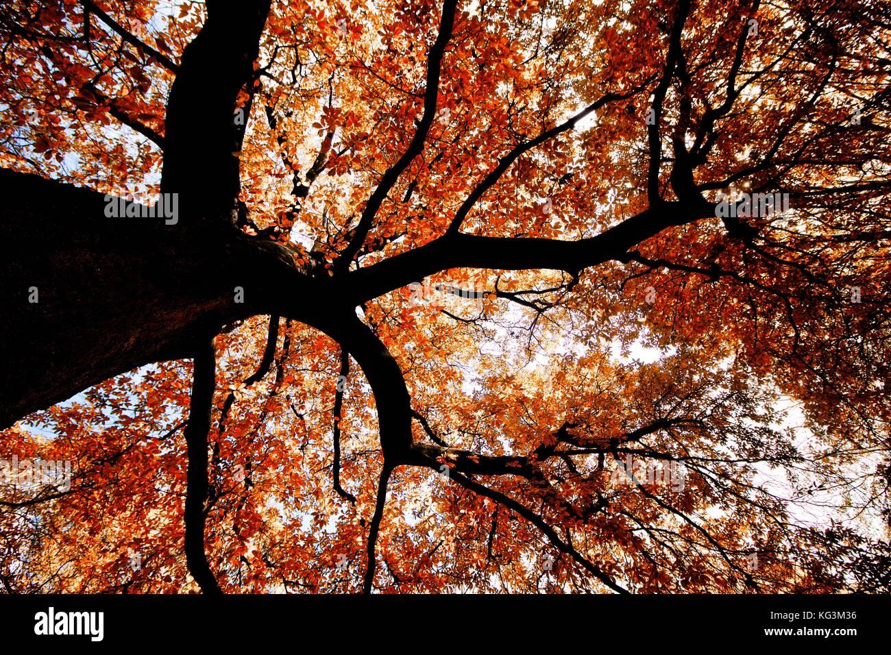 La Copa de uma árvore no inverno Immagini Stock