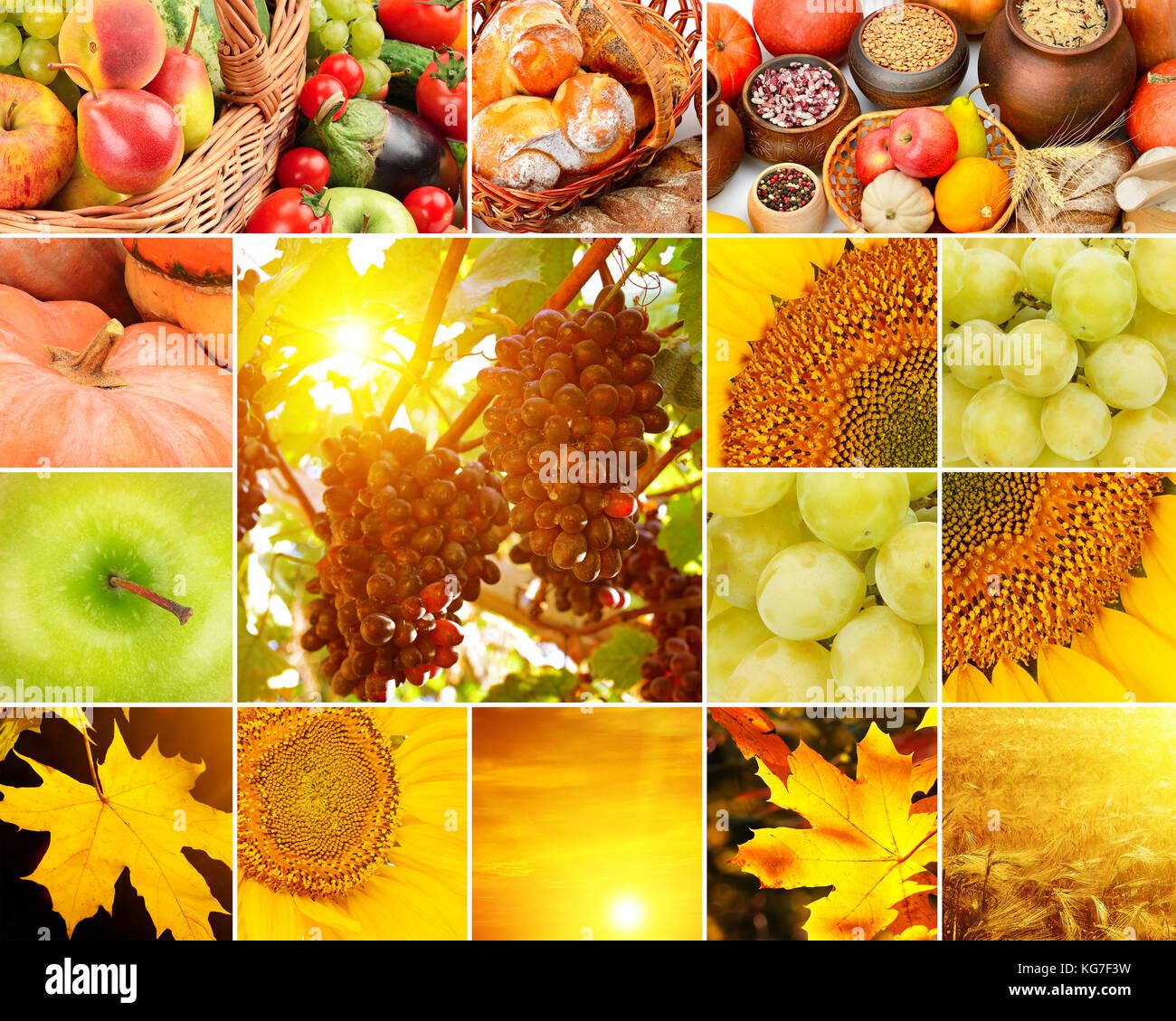 Autunno collage di frutta e verdura foglie di giallo - Immagini di quadrifoglio a quattro foglie ...