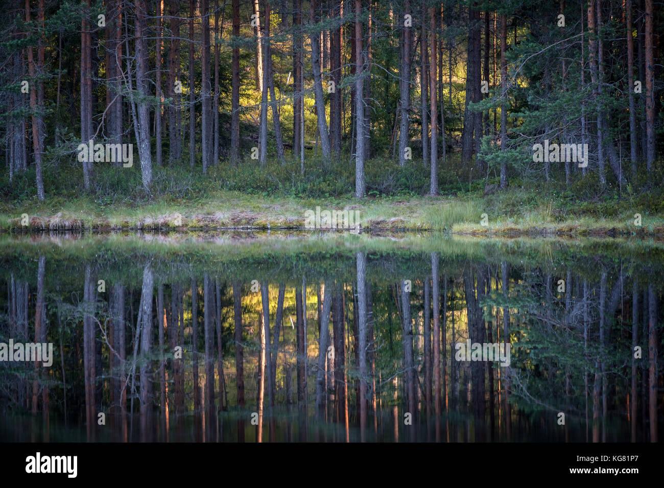Bella riflessione con alberi e bosco al piccolo lago in Finlandia Immagini Stock