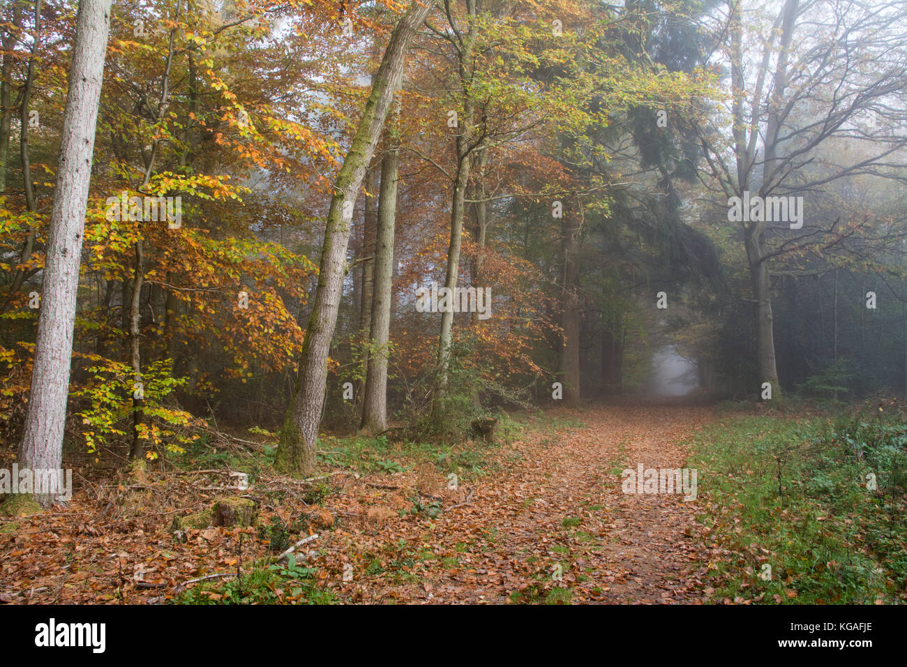 Paesaggio boschivo in una nebbiosa mattina di autunno a Ranmore comune in North Downs, Surrey, Regno Unito Immagini Stock