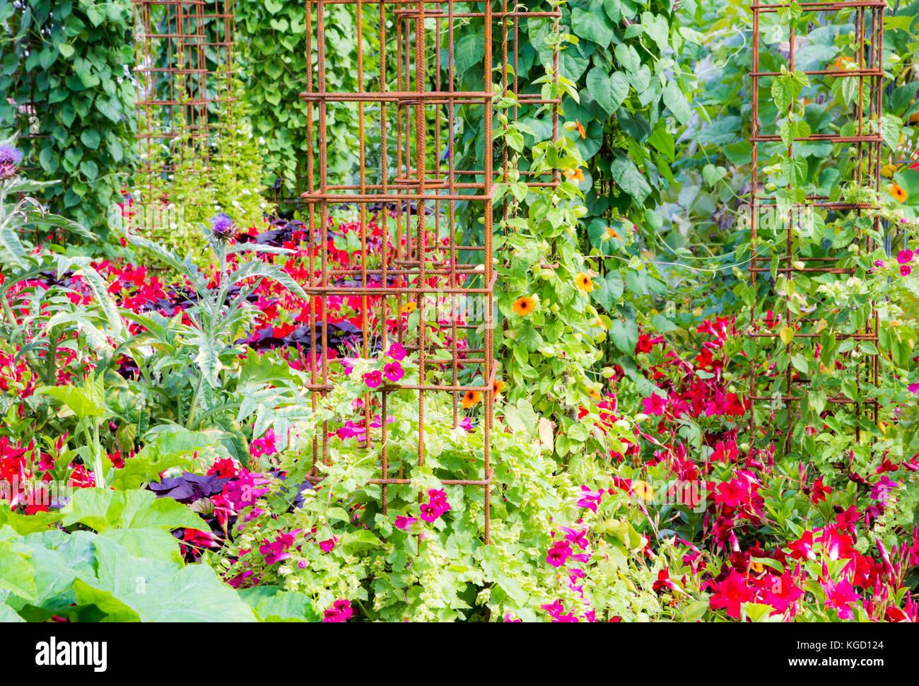 Piante Rampicanti Da Esterno giardino con un naturale parete verde con piante rampicanti
