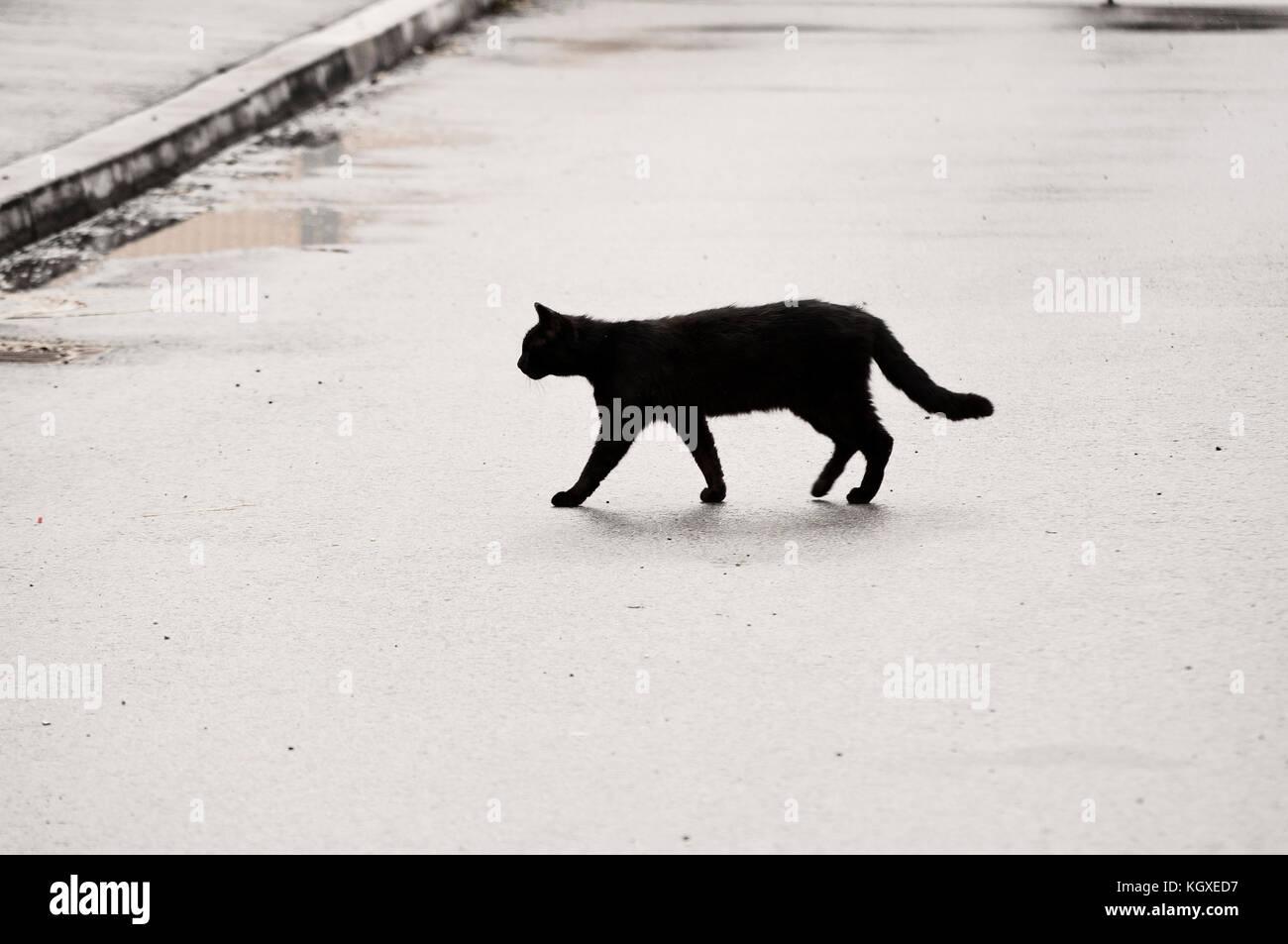 Gatto Nero Che Attraversa La Strada Foto Immagine Stock 165309907