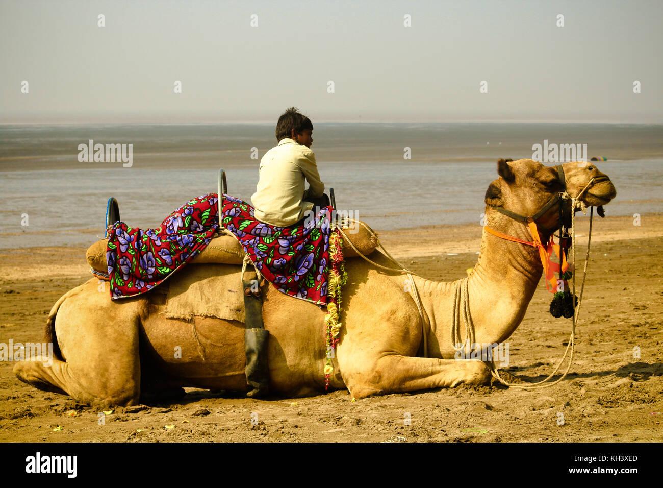 Un ragazzo sul lato spiaggia guadagna il suo sostentamento fornendo corsa in cammello per i turisti. Immagini Stock