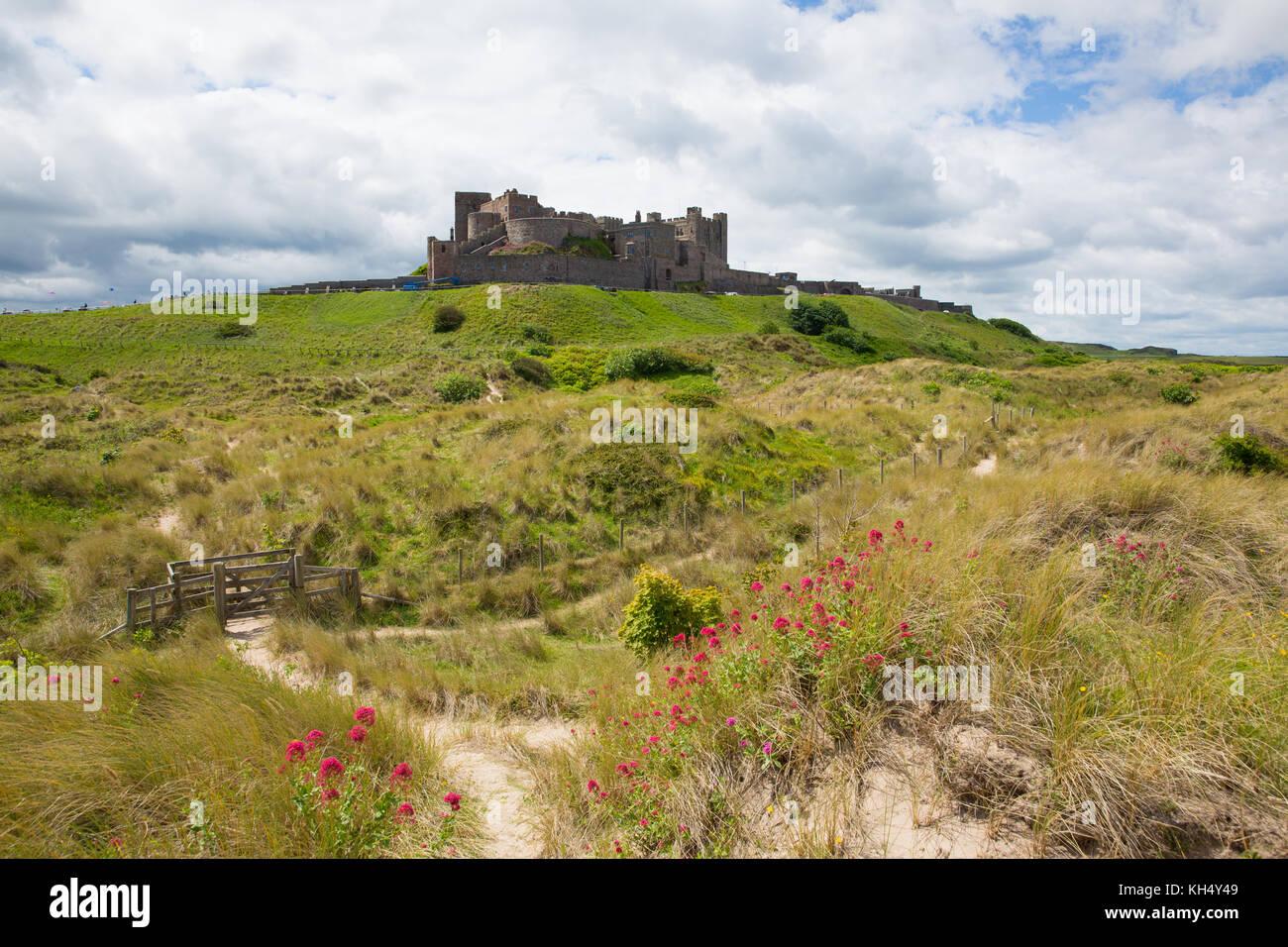 Il castello di Bamburgh Northumberland North East England Regno Unito a fiori di colore rosso in primo piano Immagini Stock