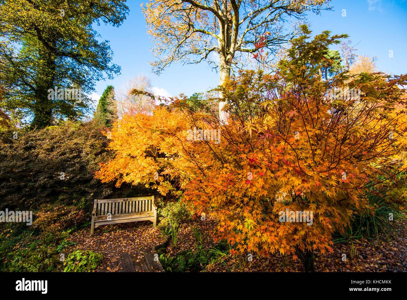 Grandi Alberi Da Giardini wakehurst place. maestosi giardini con oro di autunno e