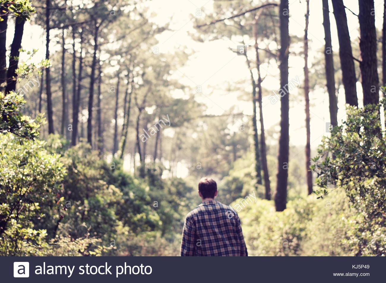 Uomo che cammina nella foresta Immagini Stock